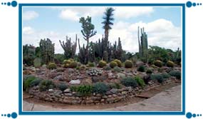 Cactus Garden of Chandigarh