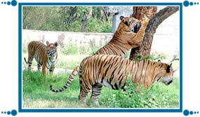 Chattbir Zoo of Chandigarh